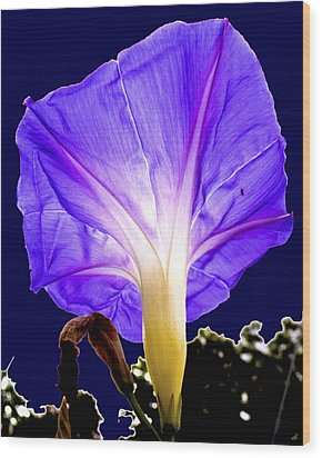 Early Morning Glory Wood Print by Roy Foos