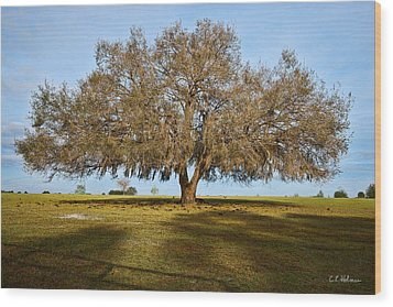 Early Morning Oak Wood Print by Christopher Holmes