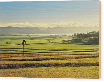 Early Morning Pastoral Scene With Keyline Plowing Near Warwick, Queensland, Australia Wood Print by Peter Walton Photography