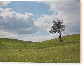 Early Spring Wood Print by Semmick Photo