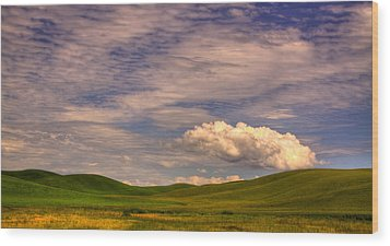 Early Summer Wheat In The Palouse Wood Print by David Patterson