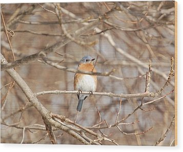 Wood Print featuring the photograph Eastern Bluebird by Mary McAvoy