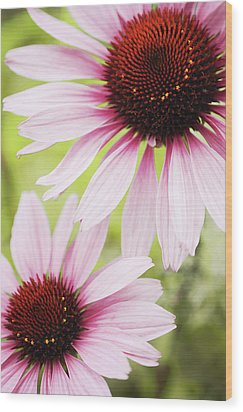 Eastern Purple Cone Flowers Wood Print by Dhmig Photography