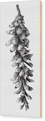 Eastern White Pine Wood Print by Inger Hutton