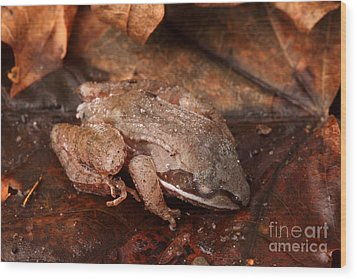 Eastern Wood Frog Hibernating Wood Print by Ted Kinsman