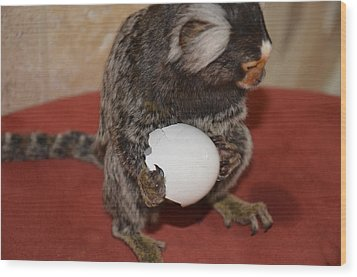 Eggs  Chewy The Marmoset Wood Print by Barry R Jones Jr