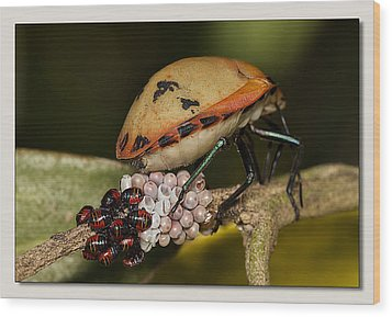 Wood Print featuring the digital art Eggs Hatched 02 by Kevin Chippindall