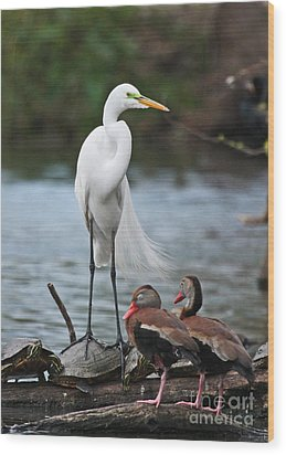 Wood Print featuring the photograph Egret - Best Friends by Luana K Perez