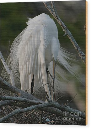 Wood Print featuring the photograph Egret - Mother And Eggs  by Luana K Perez