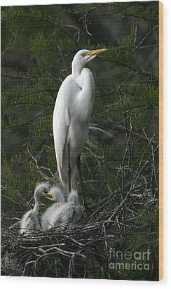 Wood Print featuring the photograph Egret - Proud Mother by Luana K Perez