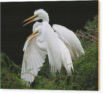 Egret Babies In The Nest Wood Print by Paulette Thomas