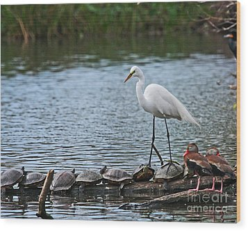Wood Print featuring the photograph Egret Bird - Supporting Friends by Luana K Perez