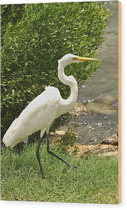 Wood Print featuring the photograph Egret By The Bay by Rick Frost