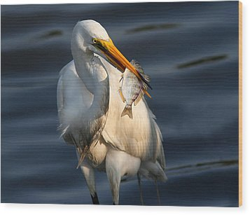 Egret Fishing Wood Print by Phil Lanoue