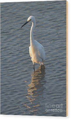 Egret In Marsh Wood Print by Gordon Mooneyhan