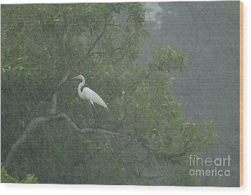 Egret In The Monsoons Wood Print by Bob Christopher