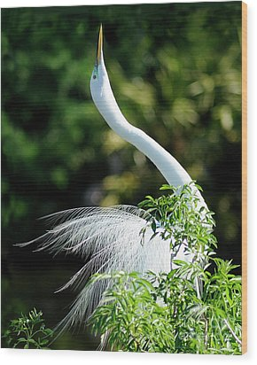 Egret  Wood Print by Nancy Greenland