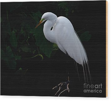 Egret On A Branch Wood Print by Art Whitton