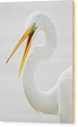 Egret Up Close Wood Print by Paulette Thomas