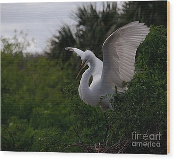 Egret Wings Wood Print by Art Whitton