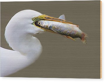 Egret With A Huge Fish Wood Print by Paulette Thomas