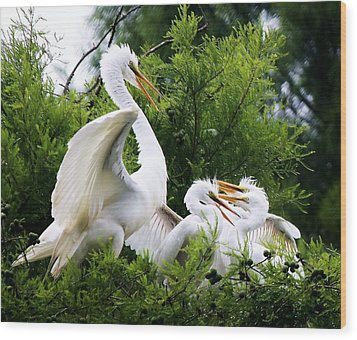 Egret With Babies Wood Print by Paulette Thomas