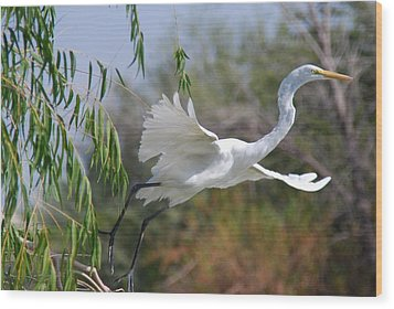 Wood Print featuring the photograph Egret's Flight by Tam Ryan