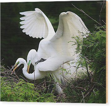 Egrets Mating Wood Print by Paulette Thomas