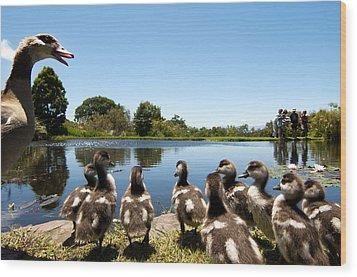 Egyptian Geese Wood Print by Fabrizio Troiani