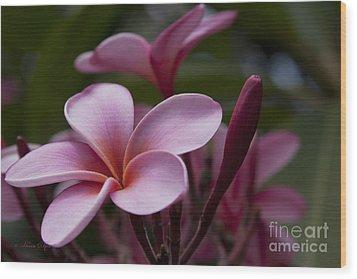 Eia Ku'u Lei Aloha Kula - Pua Melia - Pink Tropical Plumeria Maui Hawaii Wood Print by Sharon Mau