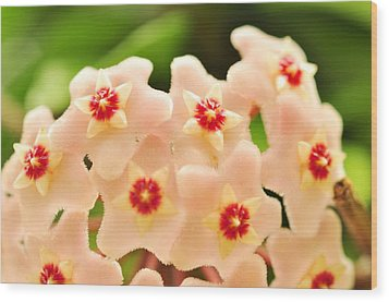 Wood Print featuring the photograph Eis A Hoya by Puzzles Shum