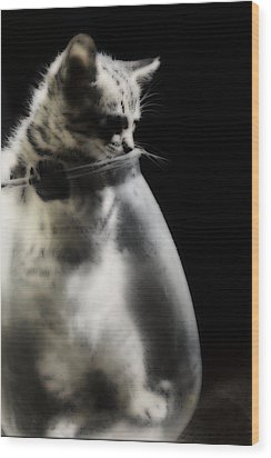 Wood Print featuring the photograph El Kitty by Jessica Shelton