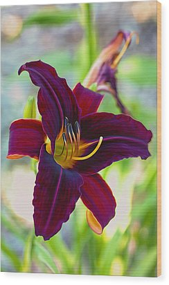 Electric Maroon Lily Wood Print by Bill Tiepelman