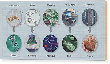 Electronic And Biologic Systems, Artwork Wood Print by Equinox Graphics