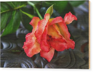 Wood Print featuring the photograph Elegance by Joan Bertucci