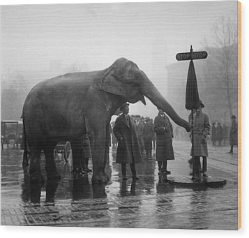 Elephant, And Stop Sign On A Wet Day Wood Print by Everett