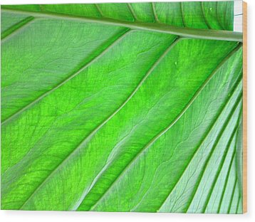 Elephant Ear Plant Leaf Wood Print by Kathryn Barry