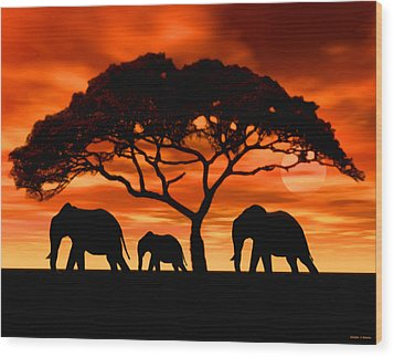 Elephant Sun Set Wood Print by Walter Colvin