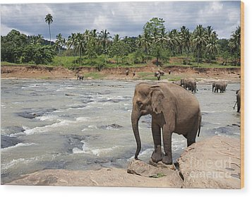 Elephants Wood Print by Jane Rix