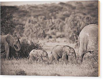 Elephants Walking In A Row Samburu Kenya Wood Print by David DuChemin