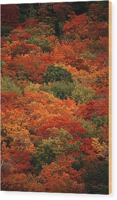 Elevated View Of Autumn Foliage Wood Print by Raymond Gehman