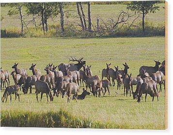 Elk Herd In The Bitterroot Wood Print by Merle Ann Loman