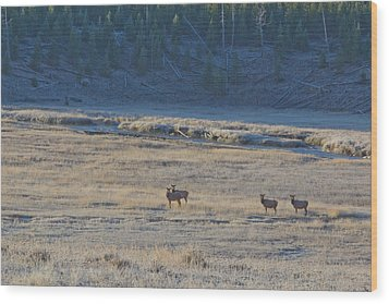 Elk In The Morning Wood Print by Twenty Two North Photography
