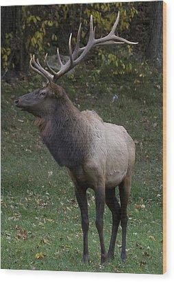 Elk Pride Wood Print