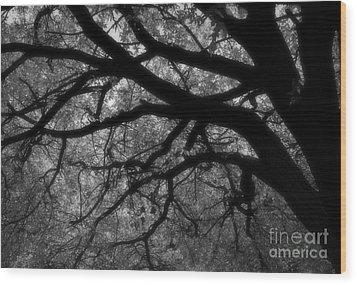 Elm Tentacles Wood Print by Fred Lassmann
