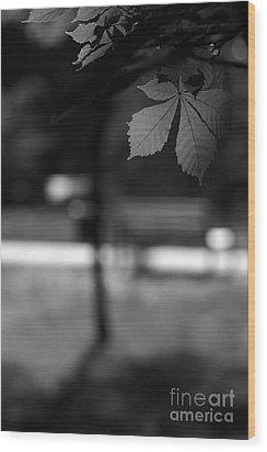 Empty Bench Wood Print by Dariusz Gudowicz