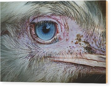 Emu Eye Wood Print by Paulette Thomas