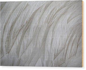 Emu Feathers Wood Print by Paulette Thomas