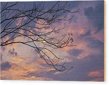 Enchanted Evening Wood Print by Rachel Cohen