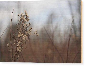 End Of Autumn Wood Print by Brady D Hebert
